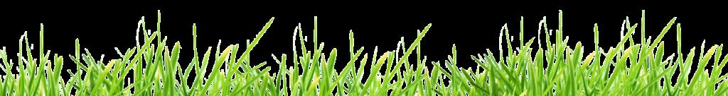 herbe-signatech